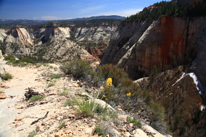 The West Rim Trail