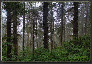 Hiking on Cascade Head Preserve, Oregon