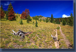 The Arapaho Creek Trail heads to timberline