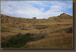 wild horses on the Jones Creek Trail