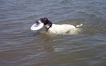 Frank takes frisbee retrieving to the aquatic dimension at Lake McConaughy