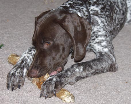 Log chewing. August 2002.