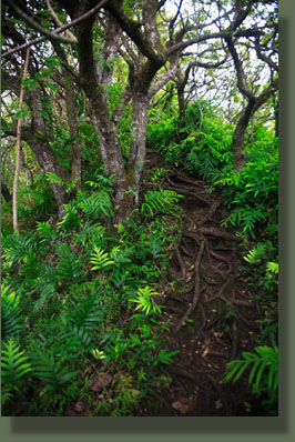 Steep section of Olomana Trail