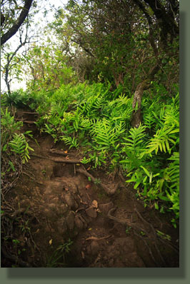 More steepness on the Olomana Trail