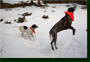 Makenzie and Henry catch snowballs on the Fish Creek trail