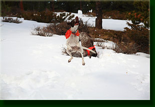 Henry getting air on a leap for a snowball