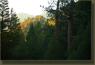 Wonderful morning in the Roosevelt National Forest