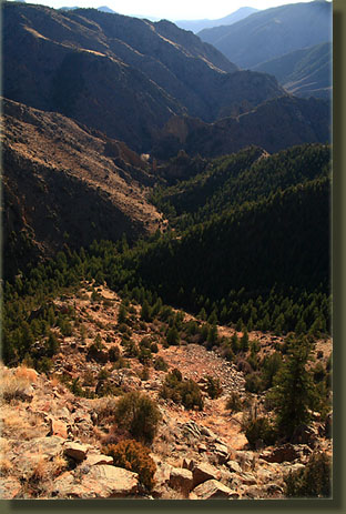 Looking back down Cedar Gulch and the Poudre Canyon from Red Mt