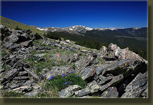 Stormy Peaks and wildflowers from Signal Mt