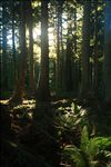 Cascade Head Experimental Forest