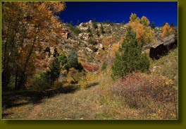 Fall color in Trail Gulch