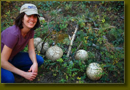 Andra checks out the giant puffballs in Trail Gulch