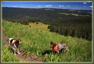 Pecos Wilderness backpacking trip