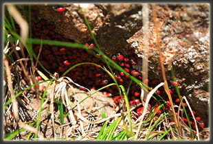 Attack of the ladybug swarm. Run for your life! Or sit and watch, whatever.