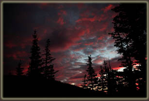 Pre-dawn with subalpine firs