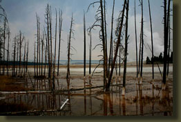 A bleak landscape in lower geyser basin