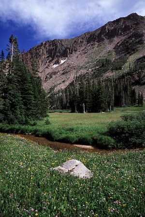 Wildflower meadow in Mt Zirkel Wilderness